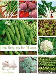Gardens - What Vegetables to Plant Now There are many vegetables that you can plant now for fall harvests.There are many vegetables that you can plant now for fall harvests. Veg Garden, Edible Garden, Lawn And Garden, Garden Plants, Vegetable Gardening, Rooftop Garden, Fall Vegetables, Planting Vegetables, Growing Vegetables