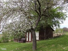Az Almafa (de appelboom) in Nagykónyi, Tolna-Mecsek huren? Hungary, Holiday, Plants, Home, Vacations, House, Holidays, Plant, Homes