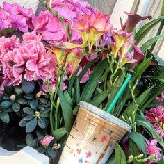 It's always sunny in California! #disneyland #disney #starbucks #starbuckscoffee #coffee #flowers #nature #cali #California #mainstreetusa #happiestplaceonearth #orangecounty #oc #apdays #afterlight #annualpassholder #vsco #disneyland60 #disneylandfood #foodsofdisneyland #disneylandcalifornia #Anaheim #insta_hub by ockimmie