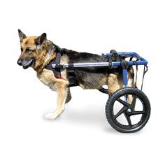 Dog Wheelchair Lg -Air Tire - Dogs under 70lbs.  | Walkin' Wheels dog wheelchair enables your dog or other pet to run and play again; get the exercise he or she needs, and live a happy, healthy life. Walkin' Wheels is a veterinarian approved canine cart designed to help pets with hip and leg problems including degenerative myelopathy (DM), hip dysplasia, arthritis, paralysis, spinal and neurological problems, surgical recovery, and more