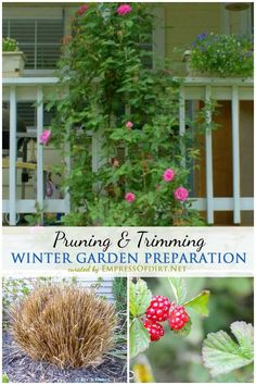 Winter Garden Preparation: Pruning & Trimming | Fall is the time for some pruning and trimming—but not too much. Much of that debris and old growth that looks so tired and scraggly is exactly what is needed to feed and protect many of the beneficial birds, bees, and other critters during the cold winter months.
