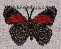 Butterfly Callicore Cynosure Pattern by Katherina Kostinsky