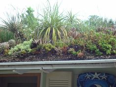 Image result for xeriscaping green roofs