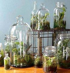 Self Sustainable Plants in Jar
