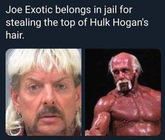 I've shared my Netflix Tiger King memes earlier, but I figured a special Joe Exotic memes post was due! Hulk Memes, King Meme, Funny Tiger, Funny Jokes, Hilarious, King Quotes, Baskin Robbins, Hulk Hogan