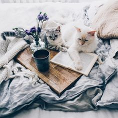 20 Books And Cats Photography - Katzen - Gatos I Love Cats, Cute Cats, Funny Cats, Crazy Cat Lady, Crazy Cats, Animals And Pets, Cute Animals, Pillos, Foto Blog