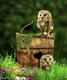 Awww, cute! baby owls....LOVE their home...maybe Ill do this with my old bucket like this...