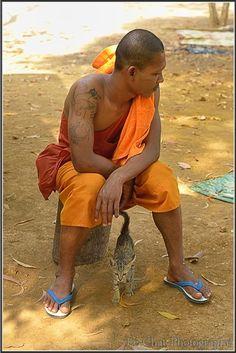 chat sous un bonze Cambodgien