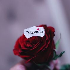 I Love You Hd Wallpapers Love I Love You Love Love You