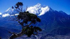 Ein Blick auf eine  schneebedeckten Achttausender im Himalaya. | Bildquelle: WDR
