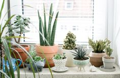Learn how to take care of indoor plants in winter in this article. Also read about winter houseplants you can grow indoors in winter.