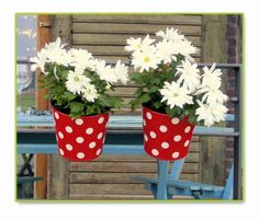 Beautiful white #flowers in red-dotted flowerpot. Nice!