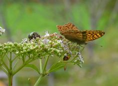 Buterfly and other insects