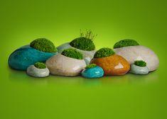 """Moss Rocks living sculptures and zen moss garden. A lot of """"moss talk"""""""