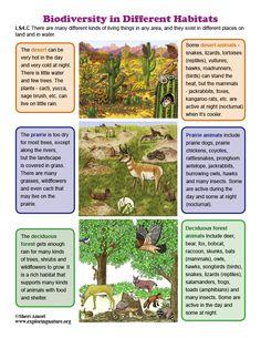 Biodiversity in Different Habitats - Mini-Poster Montessori Kindergarten, Desert Animals, Biomes, Teaching Science, Ecology, Fun Activities, Habitats, Year 7, Science Ideas