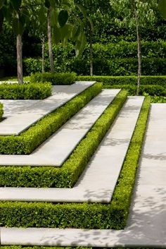 Landscape Architecture, Boxwood in between steps. Beautiful green and white classic detail