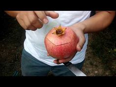 Viral Chop Video: AMAZING 😍👏You have never seen such a thing! Why did i learn at this age. How To Open Pomegranate, Fruit Creations, Comment Planter, Tasty, Yummy Food, Good Enough To Eat, Food Design, Food To Make, Making Food