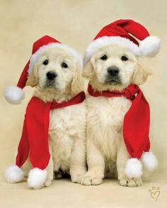 12/21/17 Merry Christmas Everybody!!