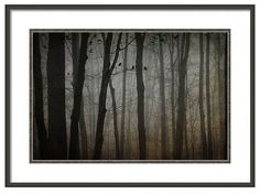 Mysterious Forest Art, Dark Woods, Flock of Blackbirds, Flying Blackbirds, Blackbird Decor, Dark Art, Fine Art Photography by BeneathNorthernSkies on Etsy https://www.etsy.com/listing/228971921/mysterious-forest-art-dark-woods-flock