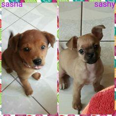 Sasha y sashy