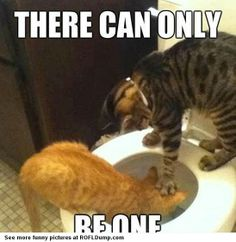 I'm the only one! #meme #funny #lol #cat