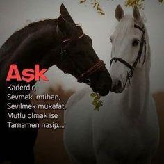 Horses, Animals, Life, Image, Photography, Instagram, Animales, Photograph, Animaux