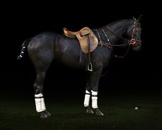 Cavallo 4, 2008 by Irene Kung