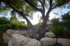 LOVE this shot! :)    Cat Mountain – Modern | Native Edge Landscape :: Austin, Tx