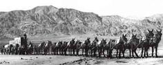 Twenty-mule teams were teams of eighteen mules and two horses attached to large wagons that ferried borax out of Death Valley from 1883 to 1889. They traveled from mines across the Mojave Desert to the nearest railroad spur, 165 miles (275 km) away in Mojave, California. The routes were from Furnace Creek, California, to Mojave, California, and from the mines at Old Borate to Mojave.