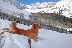 Pete lounges magnificently on a walk into Kananaskis Country, west of Calgary