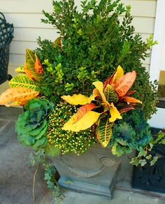 Japanese holly, crotons, cabbages, gold mum (in bud), ivy