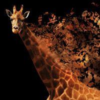 Musical Giraffe Digital Illustration