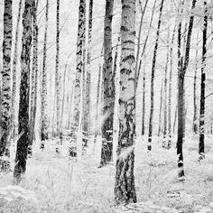 Kjøp bildet Bjørkeskogen på Bygdøy infrarødt lys, fra Bygdøy, Oslo, Norge. August 2016.  Høy kvalitet på aluminiumsplater, lerret og fotoduk. 100% fornøydgaranti.