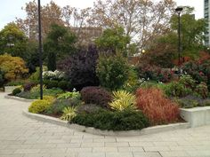 trees in mixed border - Google Search