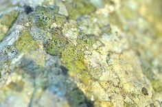 lichenlandscape_138 by coco knits, via Flickr