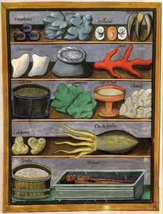 Liber de Simplici medicina    Liber de Simplici medicina  Manuscrit, encre noire et peinture sur parchemin, XVe siècle  (Livre des simples médecines)  Écrit par le médecin italien Mattheus Platearius.