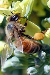 USDA survey reports on 2010/11 winter honey bee losses