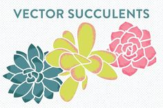 Vector Succulents by Sarah Hearts on @creativemarket