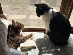 2016/03/22  信州の春3回目 もうすぐチィちゃん18 ロロちゃん13です