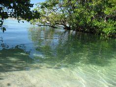 The river at Hacienda Tres Rios near Playa del Carmen, Mexico. The cenote and river meets the sea. Perfection.