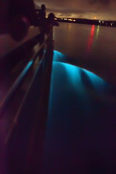 Bioluminescence in Vieques, Puerto Rico