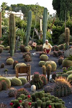 We wish you all the dreams comes true for the new Year! Giuseppe D'Ambra made his botanical Garden on Ischia, 50 Year of passion...