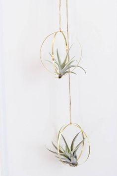 Metal Orb Air Plant Hanger Made in your choice of steel or brass metal Hand formed and hung on natural hemp twine Can be ordered with or without the airplant included Air. Green Plants, Air Plants, Indoor Plants, Air Plant Display, Plant Decor, Flower Pot People, Rare Birds, Plant Holders, Plant Hanger