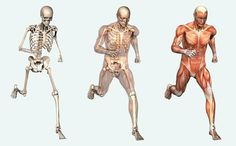 Facts About Human Body. So you think you know everything about your body? The human body is so magnificent that having enough knowledge about it is still not enough! Now we might know that we are made up of 100 trillion cells, 22 internal organs, 600 muscles and 206 bones, but there are some other interesting facts that might amaze you. So here they are: