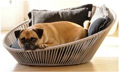 The benefits of memory foam dog beds for hip dysplasia