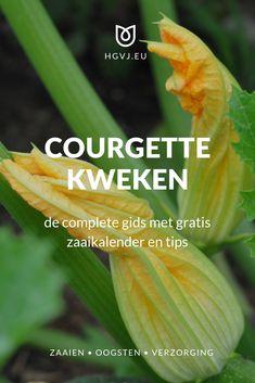Fruit Garden, Vegetable Garden, Garden Plants, Irrigation, Fruits And Veggies, Eco Friendly, Home And Garden, Herbs, Nature
