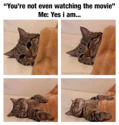 I can relate to this cat | Fun Cat Pictures