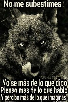 sisterofthewolves: Picture by Javier Milla Iberian wolf (Canis. Wolf Love, Beautiful Creatures, Animals Beautiful, Cute Animals, Angry Animals, Wolf Spirit, Spirit Animal, Der Steppenwolf, Wolf Quotes