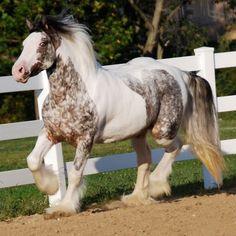 The beautiful mare, Pumpkin.