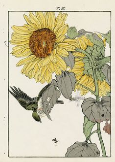 Sunflower, Bunting from Imao Keinen Kacho original Japanese woodblock prints of birds and flowers